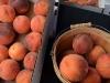 saims-fruit-palisade-peaches-2